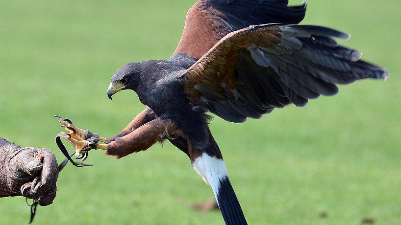 Slider vendor falconry