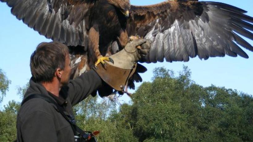 Slider vendor forest falconry