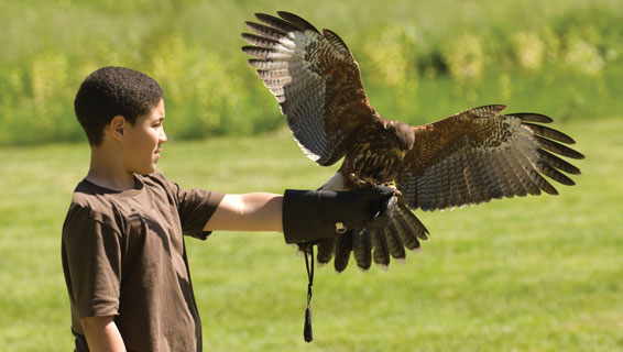 Falconry Products  Northwoods Falconry since 1984
