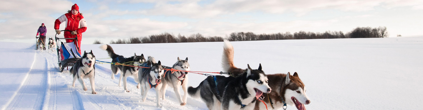Slider xperience winter dog sledding