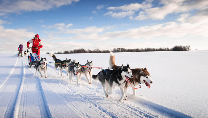 Xperience thumb responsive winter dog sledding