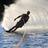 Badge water water skiing